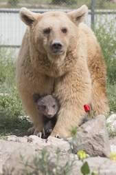 bear rescue armenia restaurant