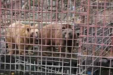 bears armenia rescue restaurant