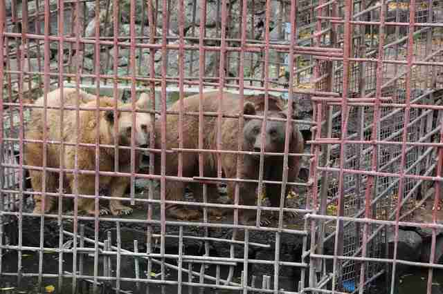 Bear Who Spent 10 Years In Flooded Cage Welcomes The Best Surprise