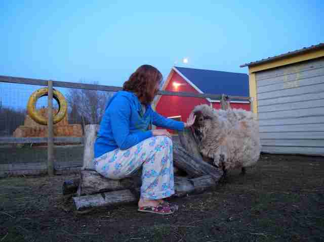 Woman comforting sheep