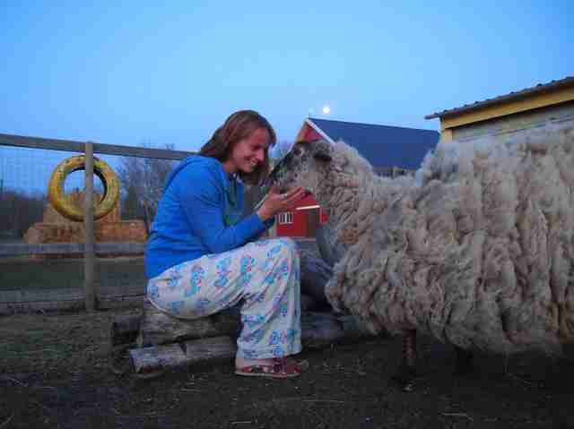 Woman with sheep with overgrown fleece
