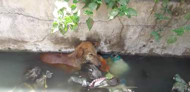 dog falls into a well