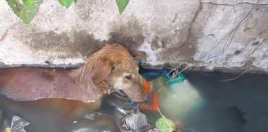 dog trapped in a well