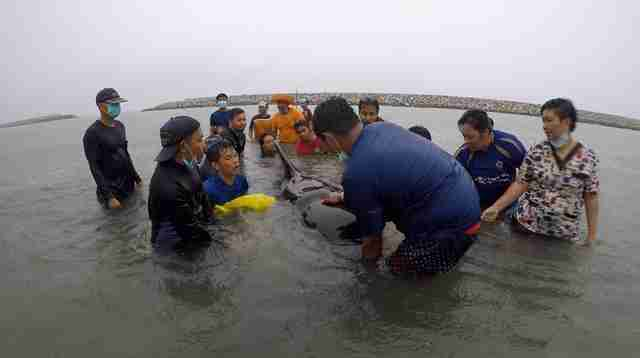 whale rescue litter death thailand