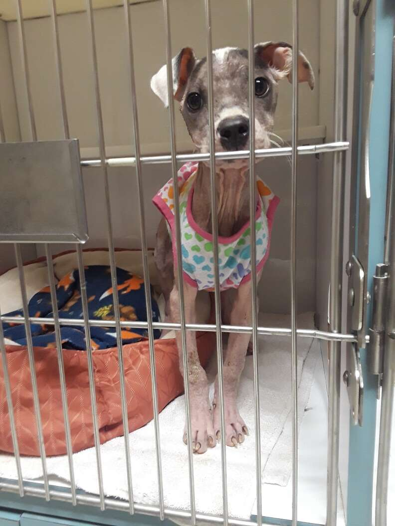 Sick puppy inside kennel