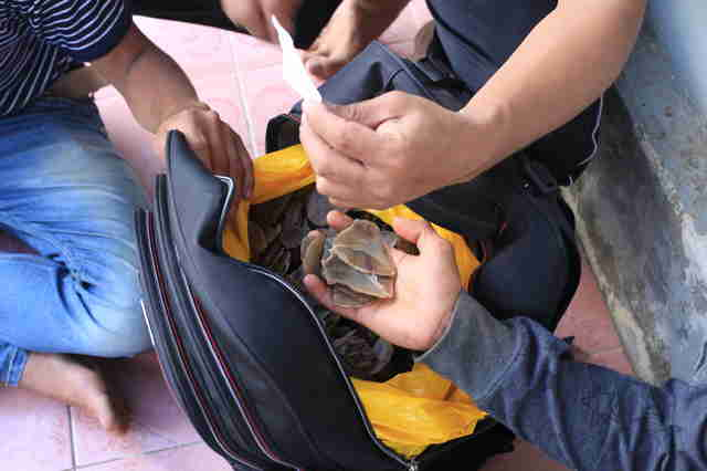 Indonesia police bust pangolin smugglers