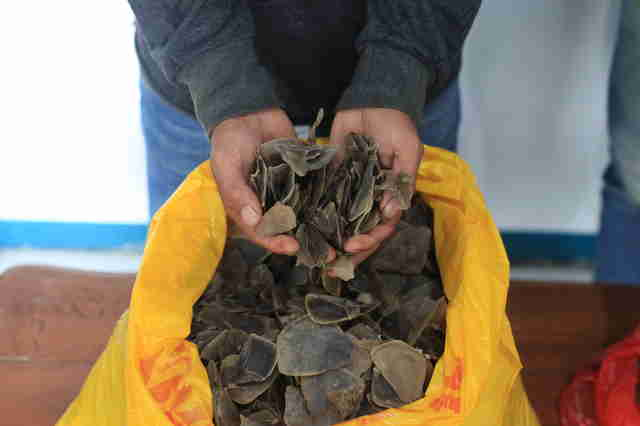 Indonesia police bust pangolin smugglers in restaurant