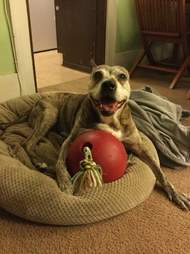 dog rescue cancer new york