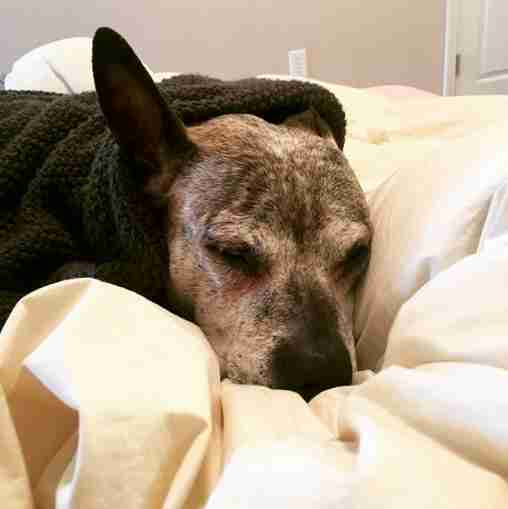 dog senior abandoned cancer new york