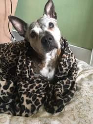 dog cancer rescue new york