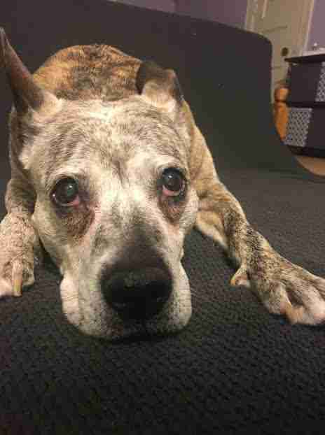 senior dog cancer adoption abandoned new york