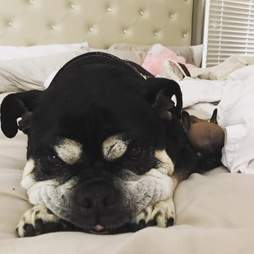 rescue puppy cleft palate breeder