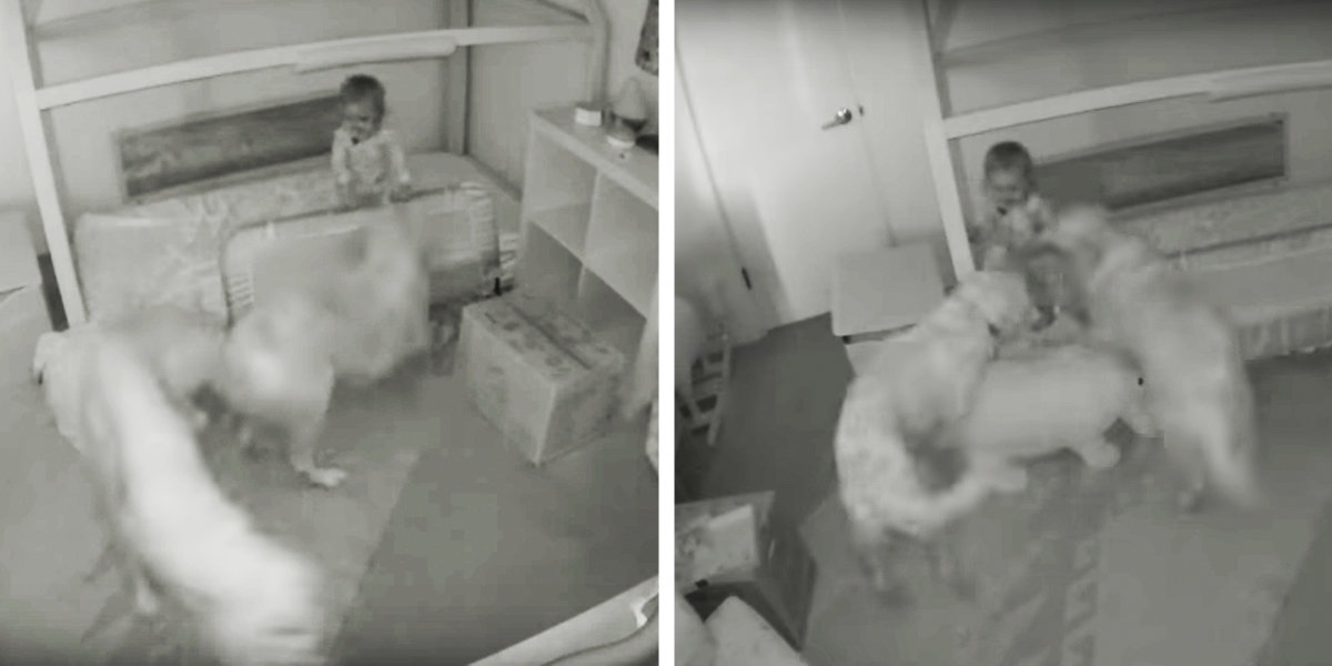 Dogs Help Toddler Escape Her Room So She Can Give Them Snacks