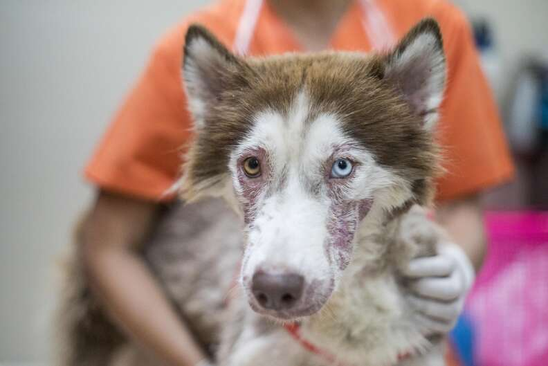 Dog with bad case of mange