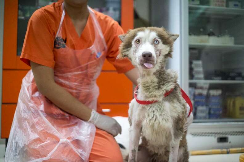 Woman helping dog with mange