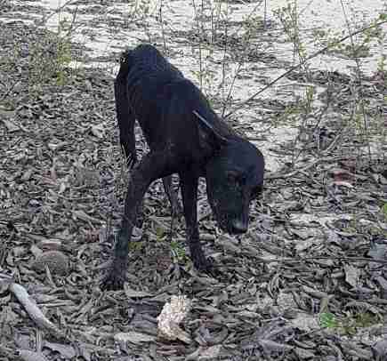 abandoned dog amazon