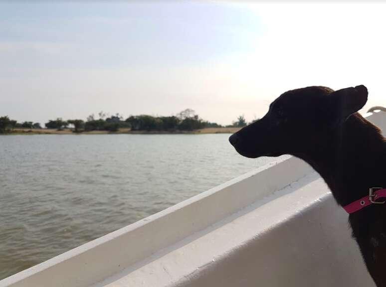 negrita amazon dog rescue
