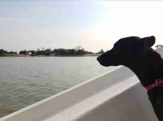 negrita amazon dog rescue