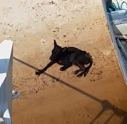 dog abandoned amazon