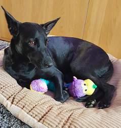 amazon dog rescue