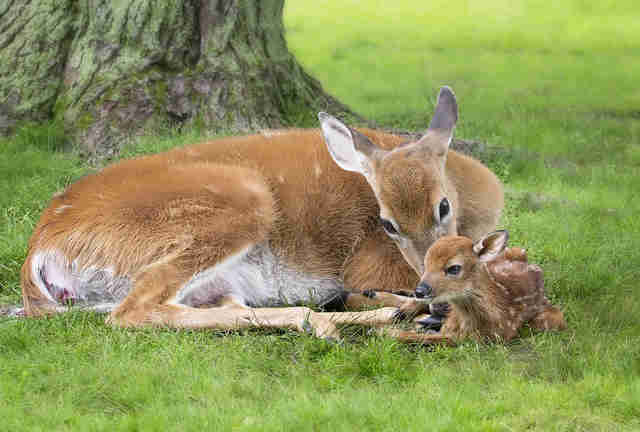 Image result for deer with baby