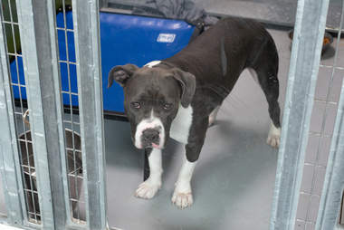 stressed out shelter dog needs a home