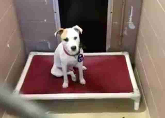 Young dog sitting on bed in shelter kennel