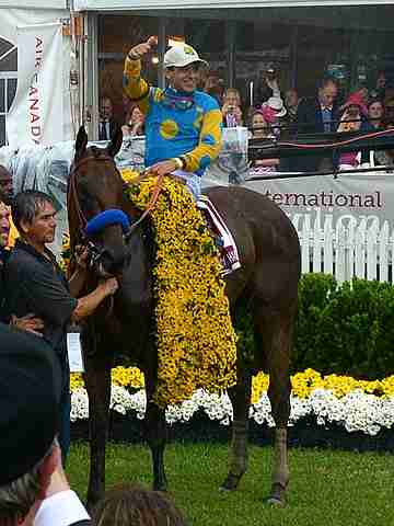 American Pharoah winner of the Triple Crown