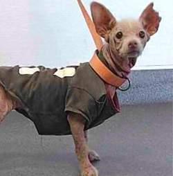 mystery bald dog