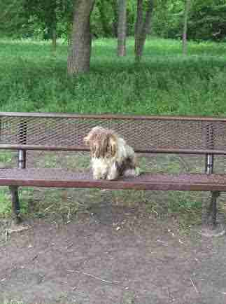 Dog with matted fur sitting on park bench