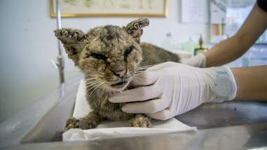 Cat with bad skin condition