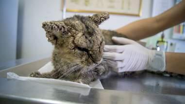 Woman touching sick cat at vet clinic