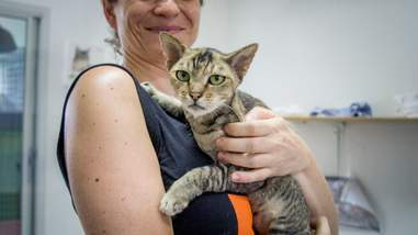Woman holding cat recovering from skin condition