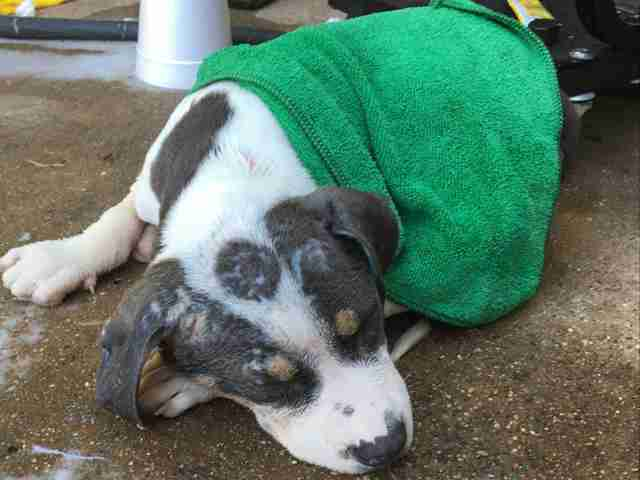 Injured puppy on side of Texas road