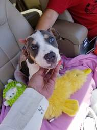 Injured puppy found on side of Texas road