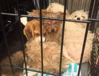 six puppies abandoned in a field