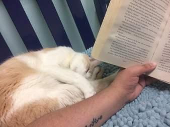 shelter cat reads harry potter