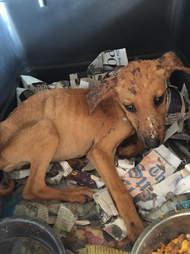 puppy rescue jamaica