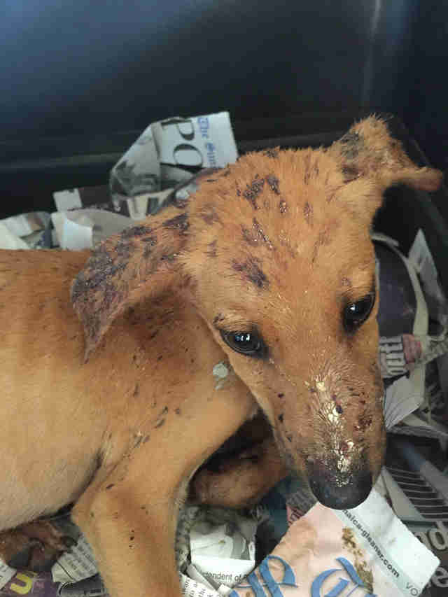 dog rescue jamaica