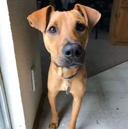 rescue puppy jamaica
