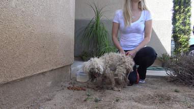 dog burned with acid