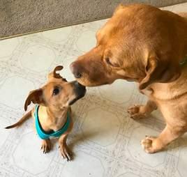 rescue dog jamaica