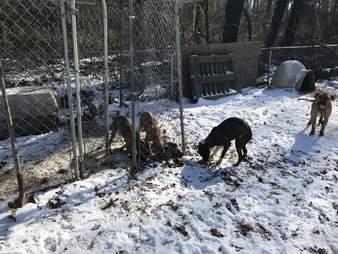 rescue pit bull virginia