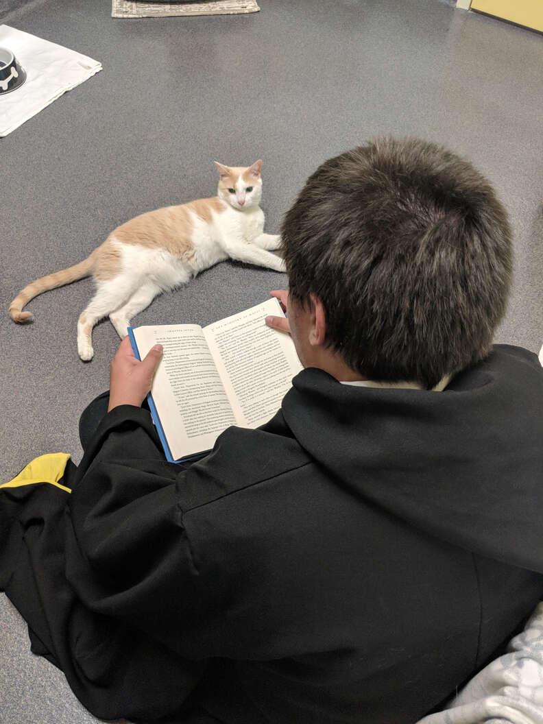 rescue cat loves reading harry potter