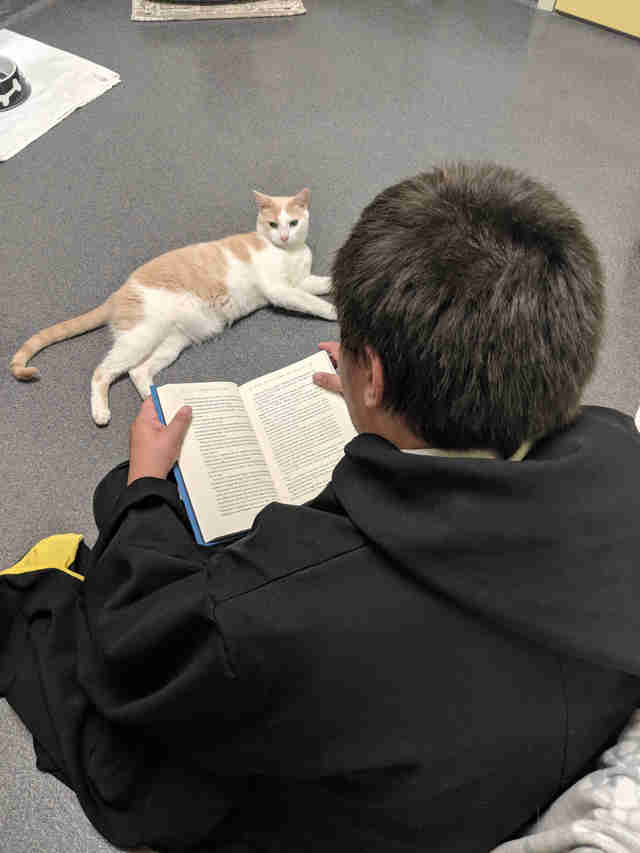 rescue cat loves reading harry potter