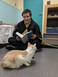 rescue cat reads harry potter