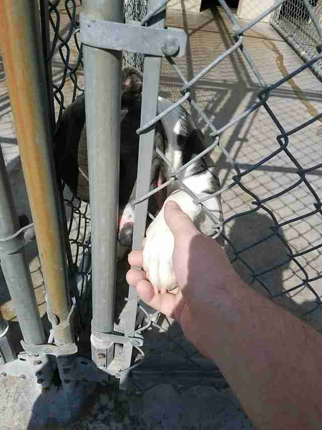 Dog sticking his paw through fence