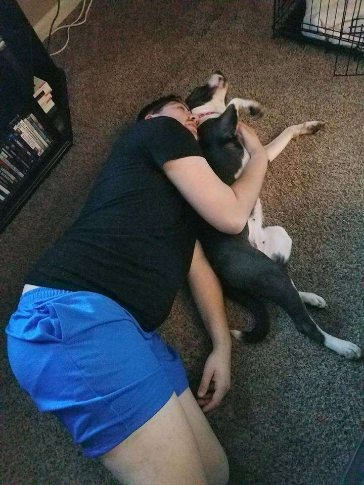 Pit bull cuddling with person