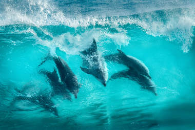 Wild dolphins playing in wave