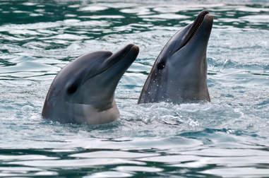 Bonded bottlenose dolphins